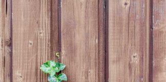Caro dreva-detail-dreva-dreveny-plot-stena-brectan