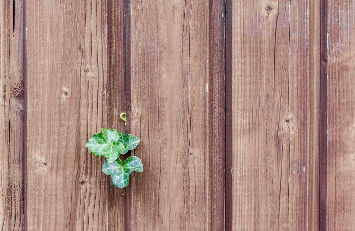 Caro dreva-detail-dreva-dreveny-plot-stena-brectan 0079a2150c4