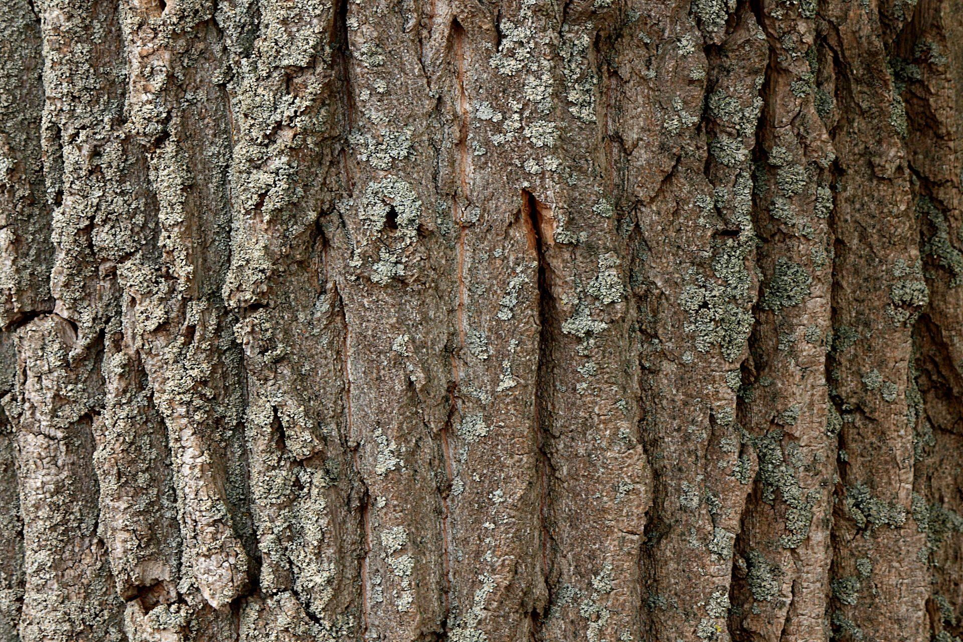 druhy-dreva