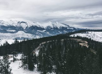 caro-dreva-dreveny-chodnik-korunami-stromov-pohlad-z-hora-v-bachledovej-vysoke-tatry