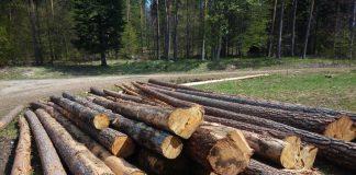 infografika-velky-prehlad-druhov-dreva