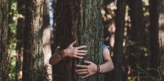 preco-je-drevo-uzasny-material