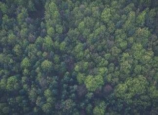 infografika-zivotna-cesta-stromu