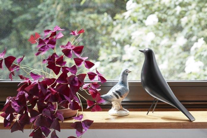dreveny-doplnok-vtak-housebird-bahnak-okno-vyhlad-kvet-drevena-parapeta