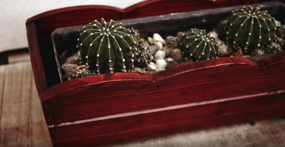 drevo-kvetinac-nater-lazura-rezbar-kaktus-crepnik