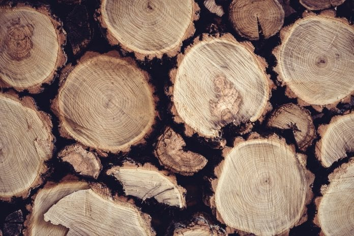 drevo-kmen-kora-letokruhy-prierez-kurenie-vyrub-priroda