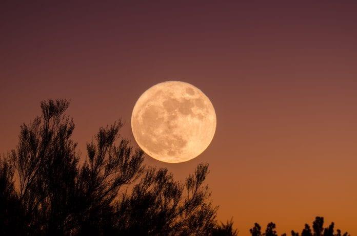mesiac-noc-vecer-stromy-les-obloha-drevo-koruna