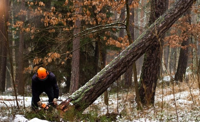 les-drevo-pilenie-strom-lesnik-drevorubac-ekologia-priroda