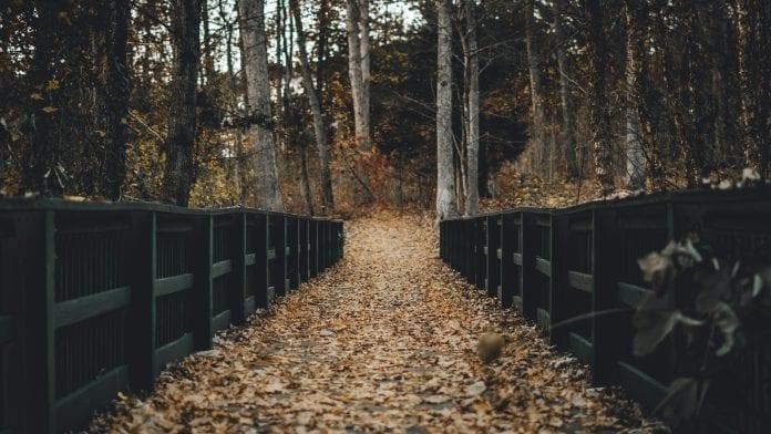 les-priroda-stromy-jesen-listie-dreveny-plot-most-ohrada-relax
