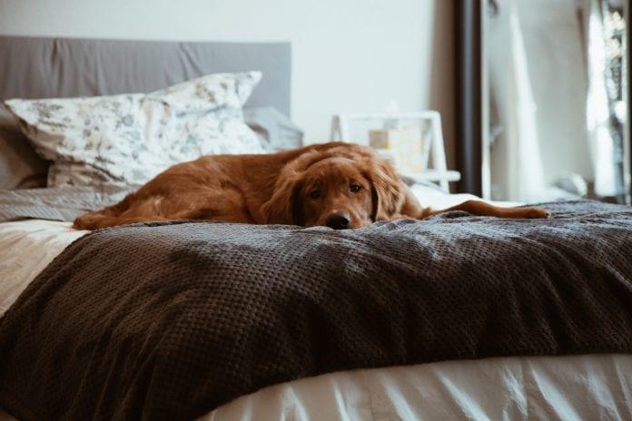 postel-oddychujuci-pes-deka-vankus-spalna-obliecky-chlpy-odpocinok