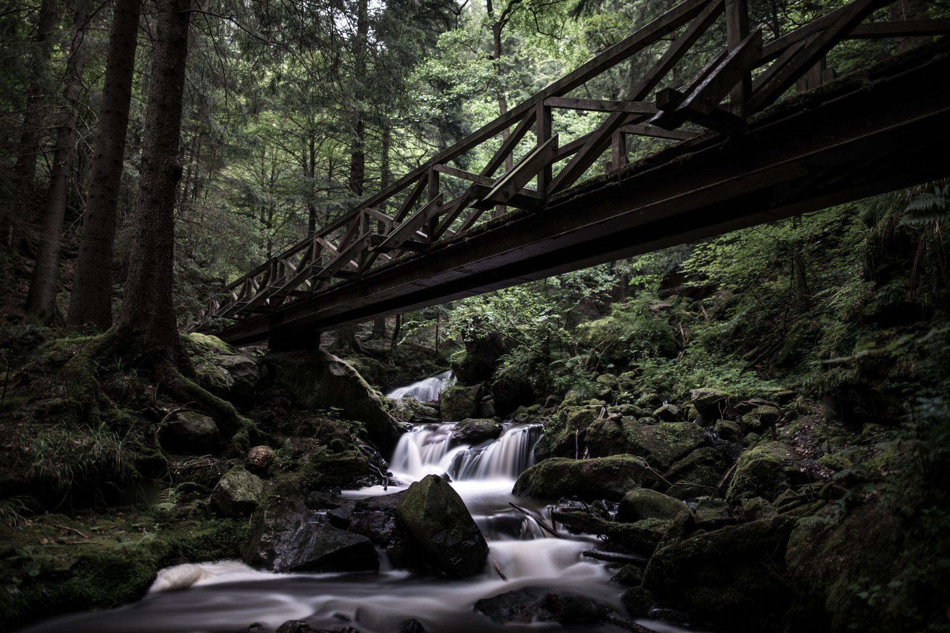 most-drevo-les-potok-stromy-fauna-flora-zelen