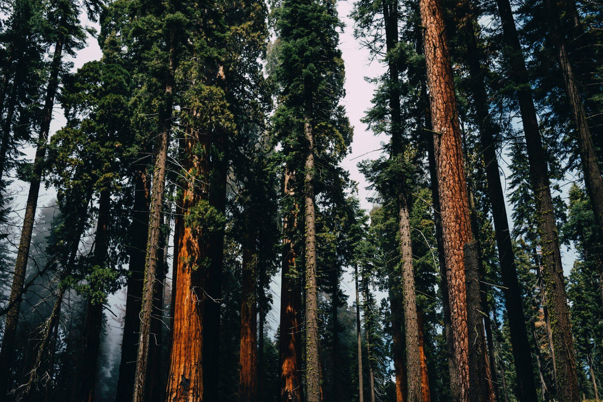 stromy-priroda-les-drevo-listie-ihlicie