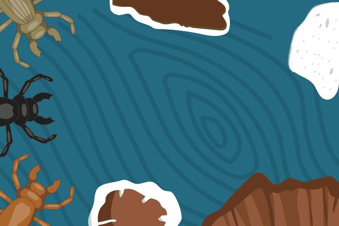 skodcovia-drevokazne-huby-ochrana-dreva
