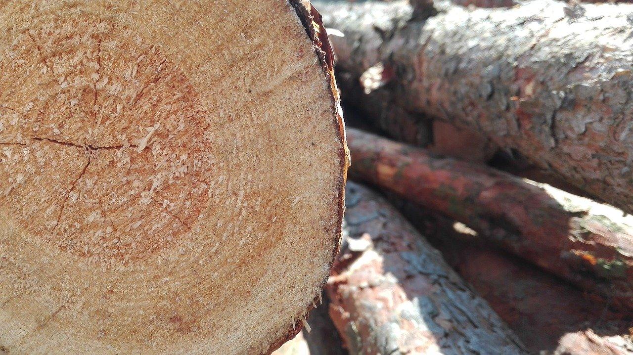 spilene-drevo-kmene-rez-letokruhy-triesky-kora