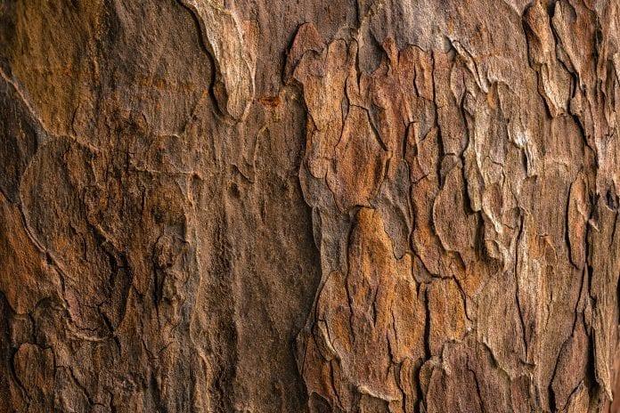 Drevo-textura-kora-material-priroda