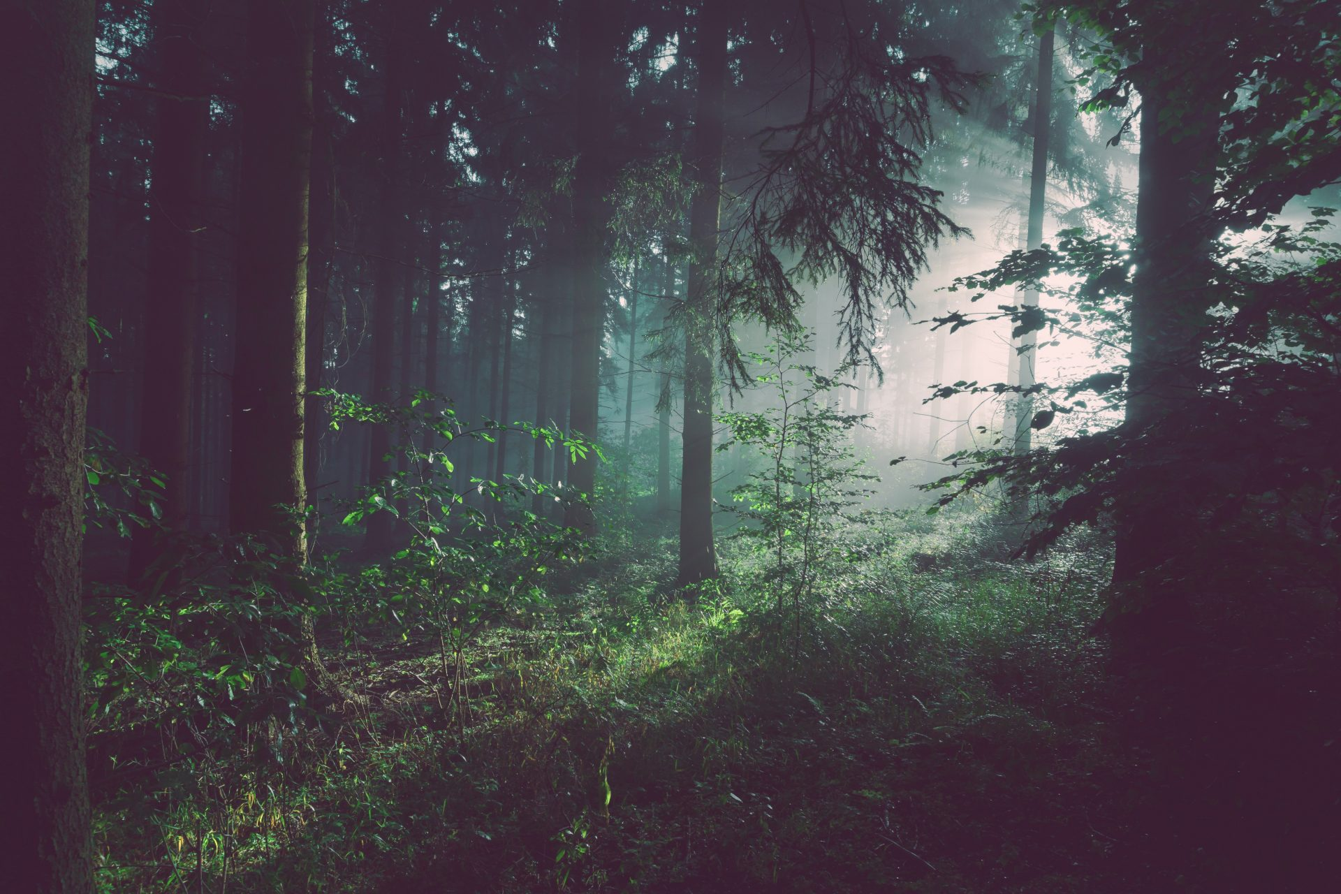 les-ekologia-flora-fauna-stromy-cisty-vzduch-oddych-priroda-machy