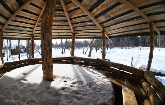 drevo-pristresok-zima-sneh-starostlivost