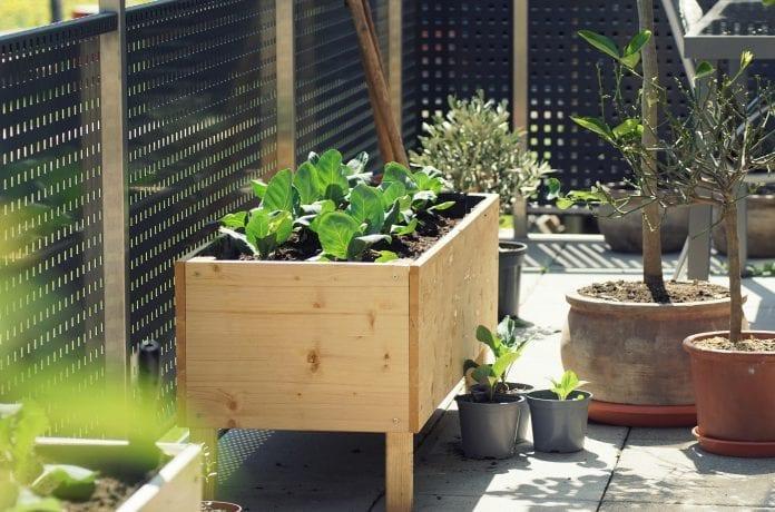 vyvýšené drevené záhony, drevený záhon, dreveny zahon na bylinky